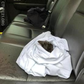 Kitten awaiting transport to the animal hospital.